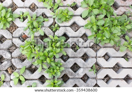 Plants on cement block. - stock photo