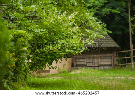 plants on the background of the old wooden house in village