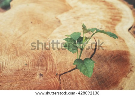 Plants on the wood