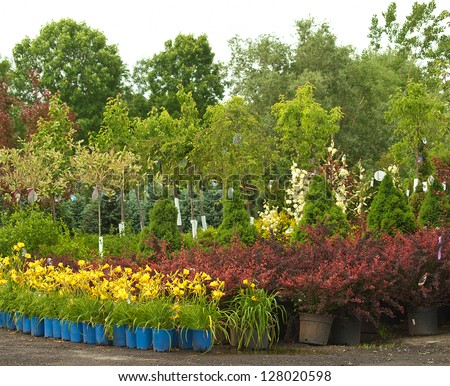 plants outside a nursery for sale in spring - stock photo