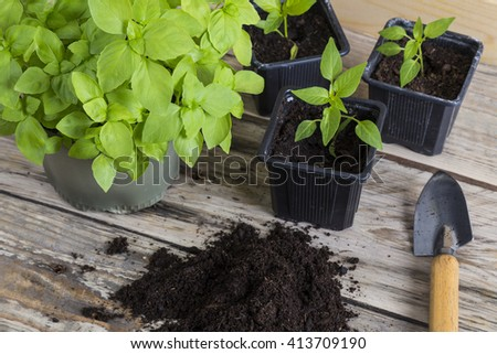 Plants with compost and gardening trowel - stock photo