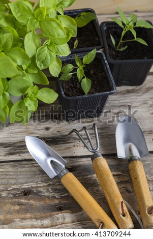 Plants with gardening tools - stock photo