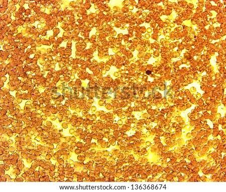 Permanent slide plate under high magnification stock photo