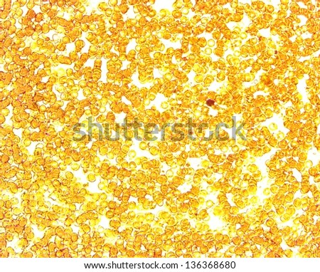 Plasmodium berghei unicellular parasite protozoan permanent