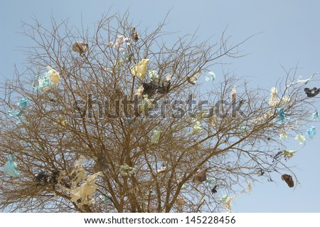 Plastic bags caught in dead tree
