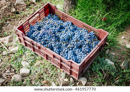 plastic box for small vineyard harvest