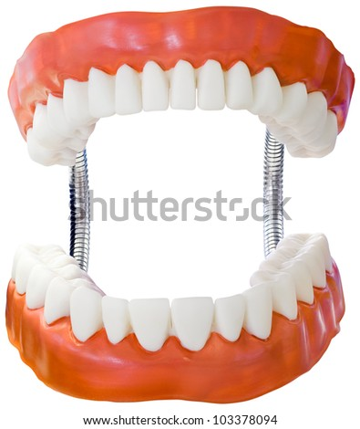 Plastic Denture Model Isolated with Clipping Path - stock photo