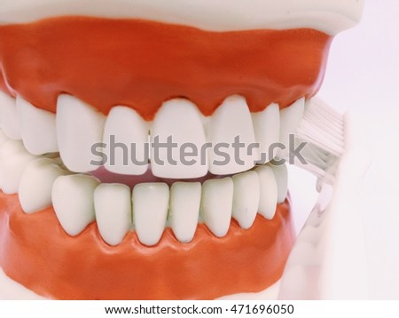 Plastic human teeth models.