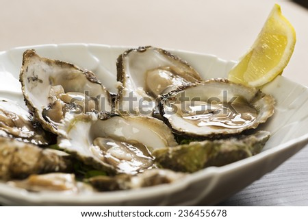 plate with raw oysters and lemon - stock photo