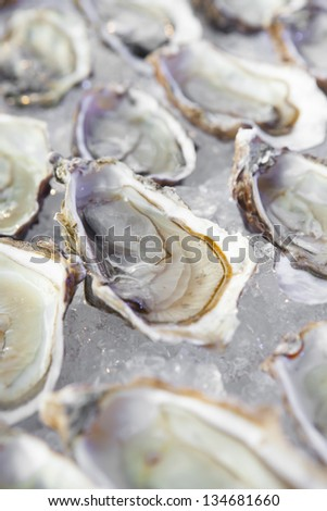 Platter of Oysters - stock photo