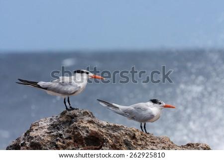 Playa Canoa North Coast waves and terns- Views around Curacao Caribbean island  - stock photo