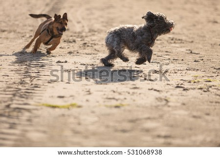 Mongrel Stock Images Royalty Free Images Vectors Shutterstock