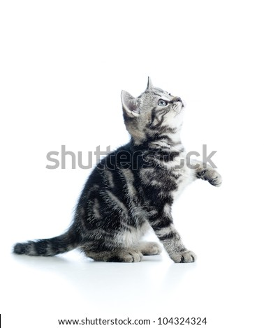 playful baby cat isolated on white background - stock photo