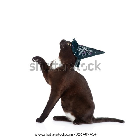 playful black cat with hat for halloween. isolated on white background - stock photo
