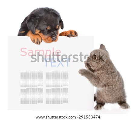 Playful cat and rottweiler puppy peeking from behind empty board. isolated on white background - stock photo