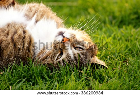 Playful cute cat kitten pussycat playing in grass outdoor, sunny summer day - stock photo