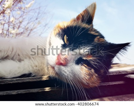 Playful domestic cat lying on a roof. Cute kitten portrait in a spring day - stock photo