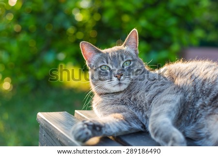 Playful domestic cat lying on one side on a black wooden bench looking down. Shot outdoors in backlight with very shallow depth of field, focused on the eyes. - stock photo
