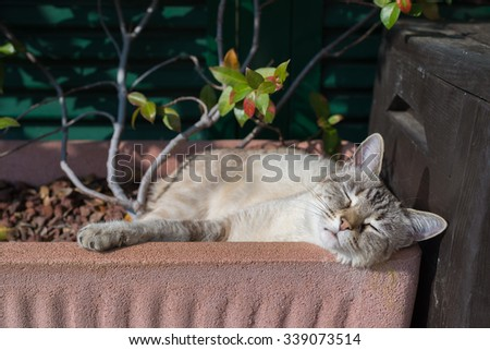 Playful domestic cat playing outdoors in home garden and looking at the camera. Natural light, shallow depth of field, focused on the eyes. - stock photo