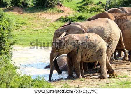 Playful elephants in Addo Elephant National Park, South Africa