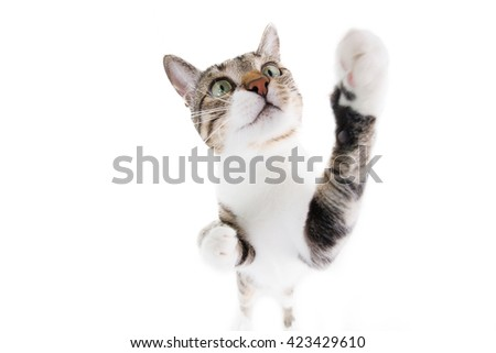 Playful funny cat close-up isolated on blue background - stock photo