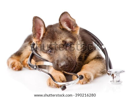 Playful German Shepherd puppy with a stethoscope on his neck. isolated on white background