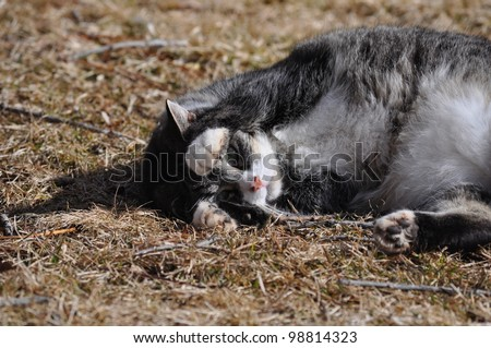 Playful Gray Cat in Yard