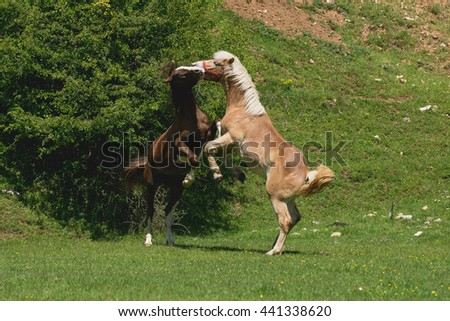 Playful horses on field in summer