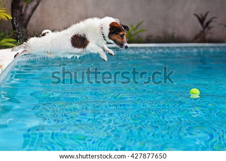 Playful jack russell terrier puppy in swimming pool has fun - dog jump and dive underwater to retrieve ball. Training and active games with family pets and popular dog breeds on summer holiday - stock photo
