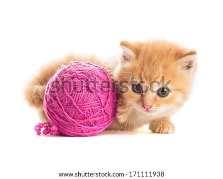 playful kitten - stock photo