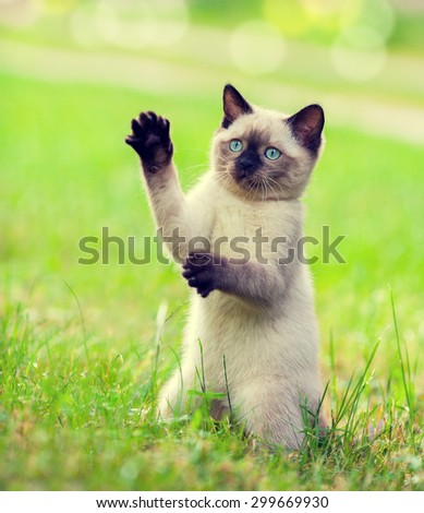 Playful kitten  begging on the grass - stock photo