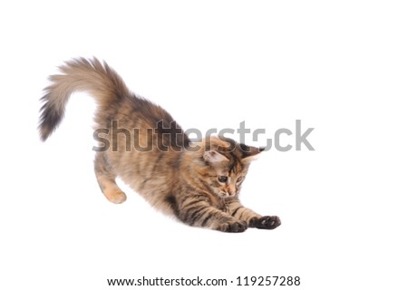 playful kitten cat isolated on white - stock photo