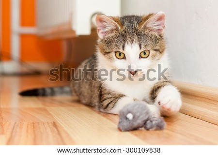 Playful kitten laying on a floor playing with a mouse toy - stock photo