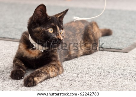 Playful Kitten Looking at String - stock photo