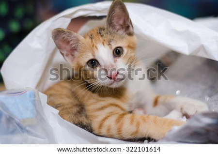 Playful kitten loves to play in plastic bag - stock photo