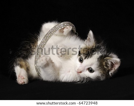 playful kitten tangled in a necklace - stock photo
