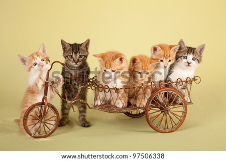Playful kittens in miniature rustic delivery bike - stock photo