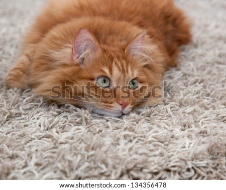 playful red fluffy cat lying on a carpet - stock photo