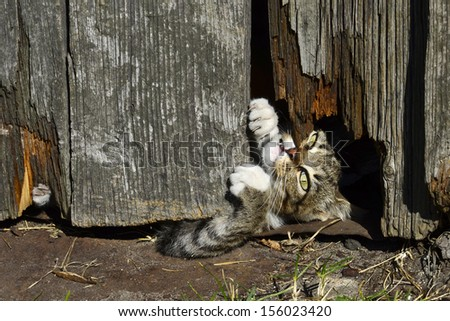 Playful tiny kitten from the mouse hole - stock photo