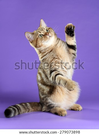 Playful young cat standing on its hind legs - stock photo