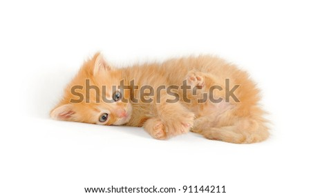 playfull red kitten, lying, isolated on white - stock photo