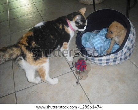 playing cat and dog - stock photo