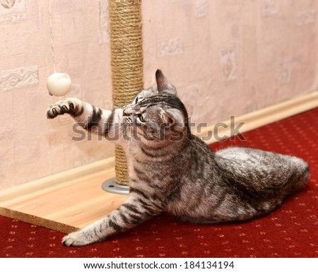 Playing cat on domestic background, curious cat, domestic cat, little cat playing in apartment, funny cat in poor light, HDR effect  - stock photo
