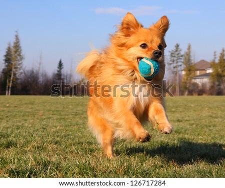 Playing Fetch - stock photo