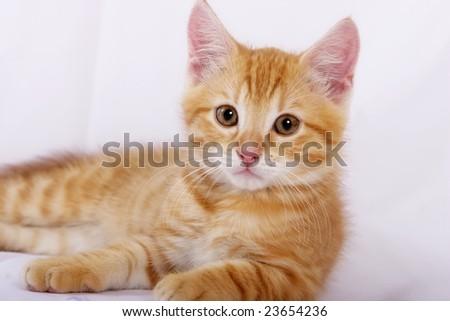 playing kitten on a white background