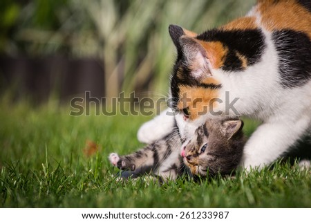 Playing kitty on grass with his mother.