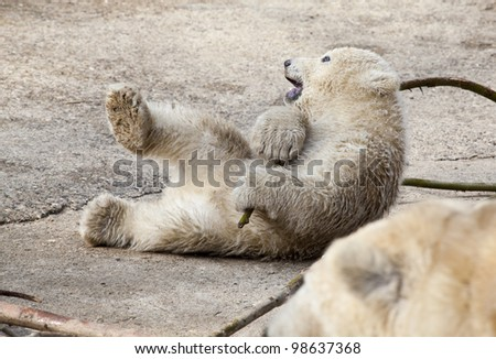 Playing Polar bear - stock photo