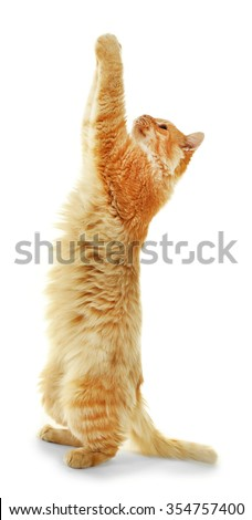 Playing red cat isolated on white background