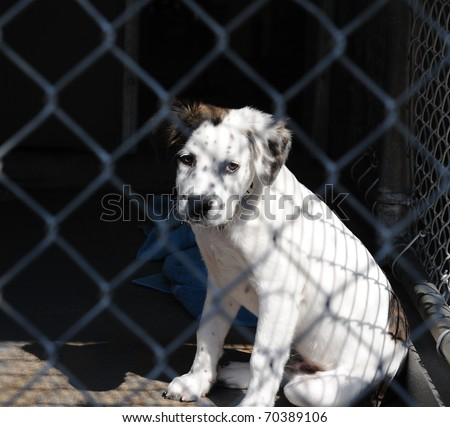 Please Adopt Me - stock photo