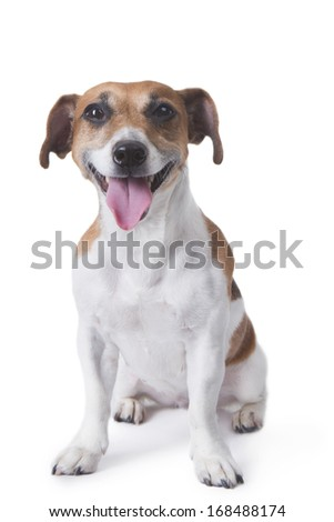 Pleased happy puppy looking at the camera and smiling. White background. studio shot
